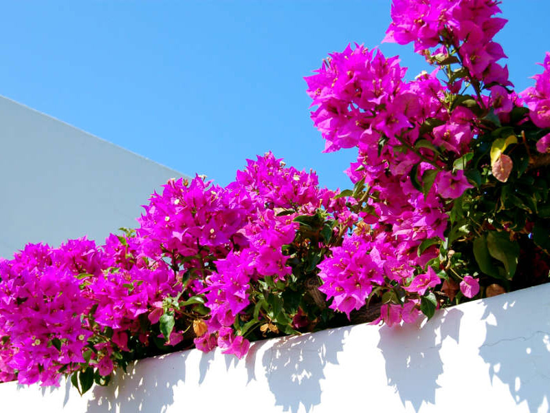 Panarea Island, pink, Photo by Lisa van de Pol, Italan Summers